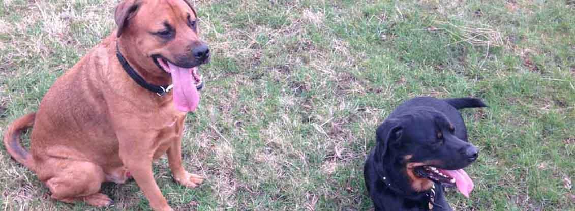 Dog Walker and Cat Sitter in Harrogate